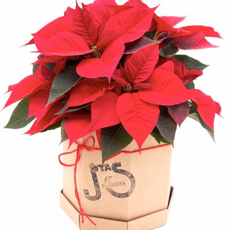 Poinsetia Hat Box